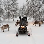 eSled with reindeers